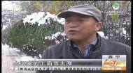 降雪天气 设施农业种植户如何应对