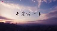 青海湖裸鲤 藏羚羊保护