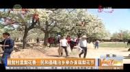 脱贫村里梨花香——民和县隆治乡举办首届梨花节