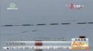 昨日祁连普降大雪 致两千多辆车被困