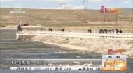 青海湖湟魚開啟洄游之旅