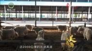 大美青海 20201013
