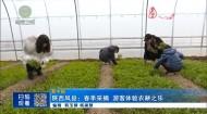 陕西凤县:春季采摘 游客体验农耕之乐