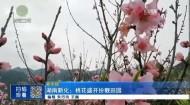湖南新化:桃花盛开扮靓田园