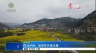 四川泸州:油菜花开蜜正甜