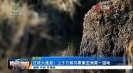 迁徙大通道!上千万候鸟聚集亚洲第一湿地
