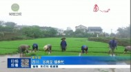 四川:谷雨至 插秧忙