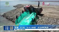 """新疆:5万尾""""水中大熊猫""""放流博斯腾湖"""