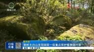 秦嶺太白山發現國家一級重點保護植物獨葉草