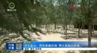 河北鹽山:特色家庭農場 帶火美麗鄉村游