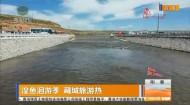 湟鱼洄游季 藏城旅游热