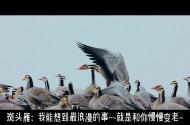 【青海·我们的国家公园】斑头雁的故事