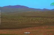 《三江源国家公园》野性江源(第三集)