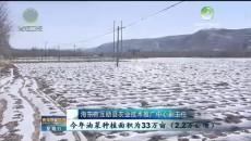 青海种植业 :结构不断优化 产业加快转变