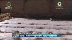 青海:东部干旱有所缓解 有利于春播耕作