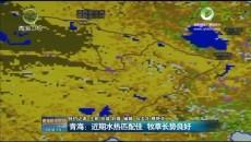 青海:近期水热匹配佳 牧草长势良好