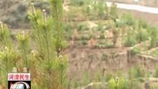 """海东市春季植树造林大会战""""战果""""显著"""