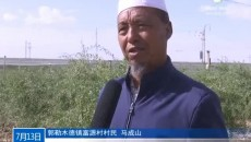 持续阴雨天给格尔木农业生产受影响