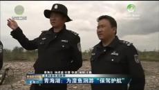 """青海湖:为湟鱼洄游""""保驾护航"""""""