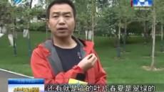 景致:百株银杏树落户人民公园