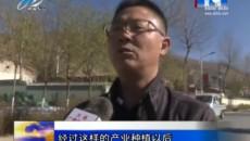 朔北乡:当归种植助力农民群众脱贫致富