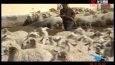 达玉草原上的雄鹰——记全国百名杰出新型职业农民文长太