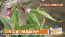 二月初春 桃花朵朵开