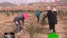 绿色河湟 生态海东 全民义务植树 建设美丽家园