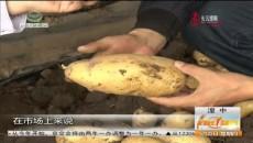"""青海洋芋新品种""""闽薯1号""""上市了"""