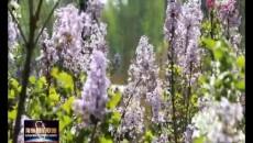 《寻找海东最?#26469;?#22825;》电视短片展播 行走在春天的花
