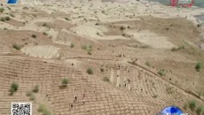 编织金色大网 锁住沙漠蔓延
