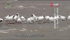 大美青海 20190724