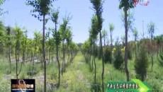 """中央生态环境保护督察进行时 昔日""""荒?#36130;隆?#22914;今""""绿草地"""""""