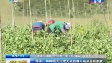 湟源:1600亩无化肥无农药露天蔬菜喜获丰收