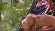 大美青海 20190903