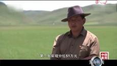 青海黃南:高原草綠見牛羊 生態恢復與脫貧并進