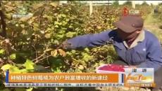 种植特色树莓成为农户致富增收的新途径
