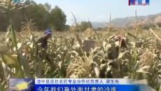 西寧市首次在湟中試種成功400畝鮮食玉米