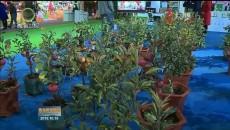 河湟农展会:新技术点亮高原现代农业发展