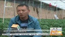 成功引進高端蔬菜品種 彰顯尖扎農業特色