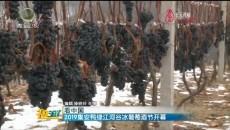 2019集安鸭绿江河谷冰葡萄酒节开幕