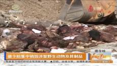 德令哈集中销毁涉案野生动物及其制品