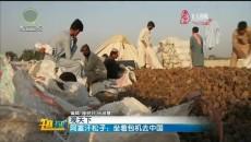 阿富汗松子:坐着包机去中国