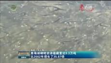 青海湖裸鯉資源蘊藏量達9.3萬噸比2002年增長了35.87倍