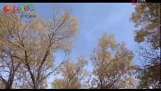 《行走格尔木VLOG》系列节目《绿水青山的故事》