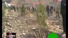"""綠色河湟 生態海東 化隆縣打響植樹造林""""大會戰"""""""