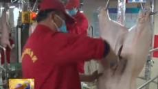 生豬屠宰企業復工復產保市場供應