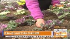 青海六盘山片区交通扶贫成效显著