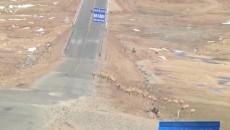 可可西里迎来今年首批藏羚羊迁徙