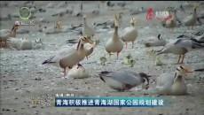青海積極推進青海湖國家公園規劃建設